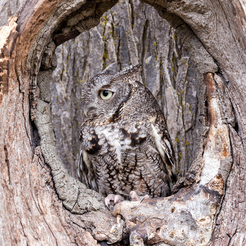 An owl sitting in the hole of a tree symbolizing something hidden that is in plain sight.